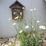 Margeriten Insektenhotel (2)