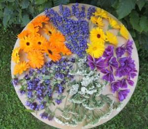 Blüten Trocknen (3)