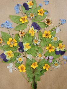 Bild Blüten