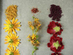 Salz Blüten färben (1)