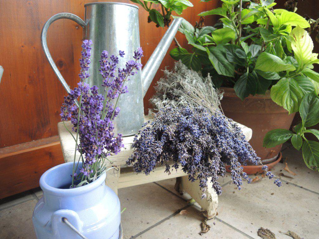 Lavendel (39)